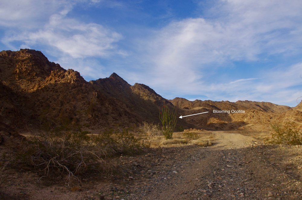 Ah, here is the desert near Yuma in springtime. It is not entirely without color. The track you see going around the Ocotillo is the road I am riding up. I believe this road ends up in the area around where I found the vertical mine shaft with all the wreckage at the top.