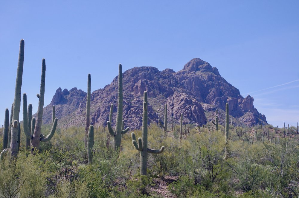 Here we have the Ironwood National Monument northwest of Tucson. The saguaro (which these cacti are) aren't really an issue because they keep to themselves rather than leaping on unsuspecting tourists.