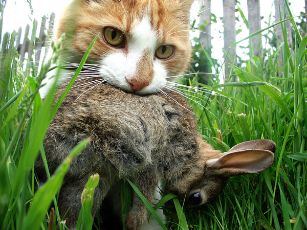 The domestic cat costs the US approximately $17 billion dollars (Pimentel et al. , 2005) in control and damages.  Domestic cats are estimated to kill 2.4 billion birds and 12.3 billion small mammals in the US alone!  Photo courtesy of nytimes.com.