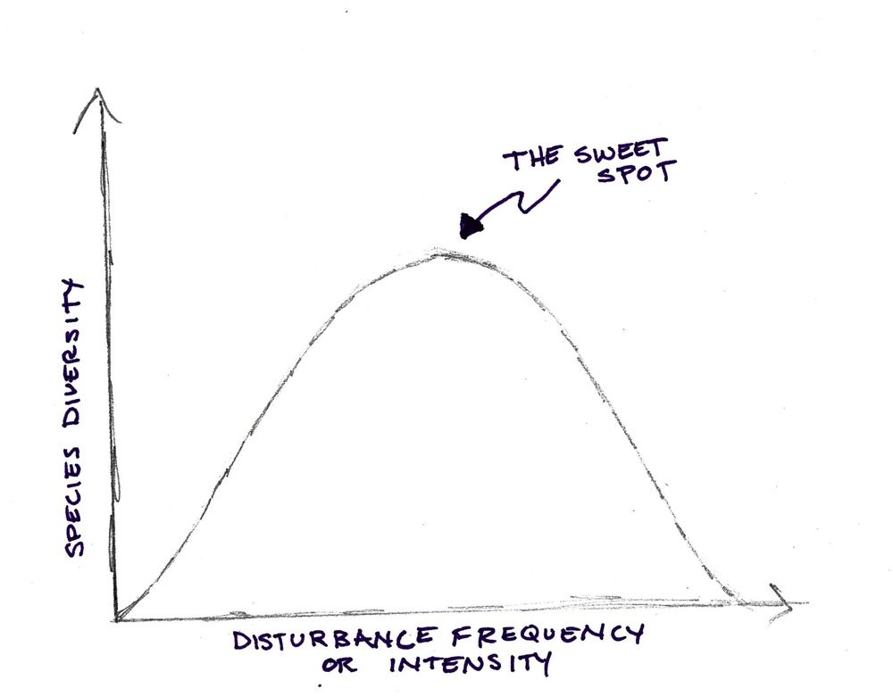 The Intermediate Disturbance Hypothesis curve. Very high and very low disturbance frequency/intensity is associated with low species diversity. A moderate disturbance frequency/intensity is associated with the highest amount of species diversity. Image credit: Alena Warren