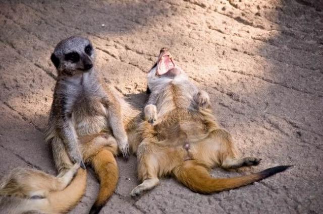 laughing animals.jpg
