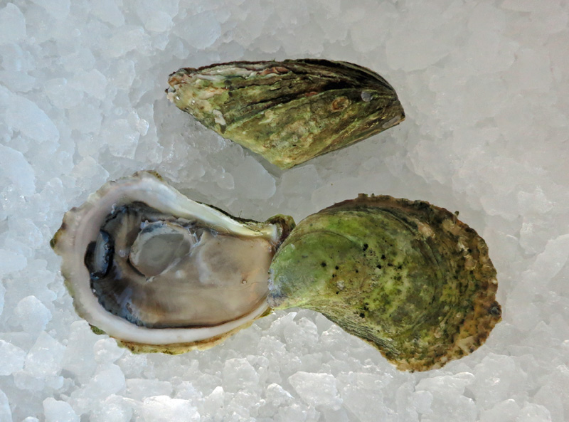 Cavendish_Cup_Oysters.jpg