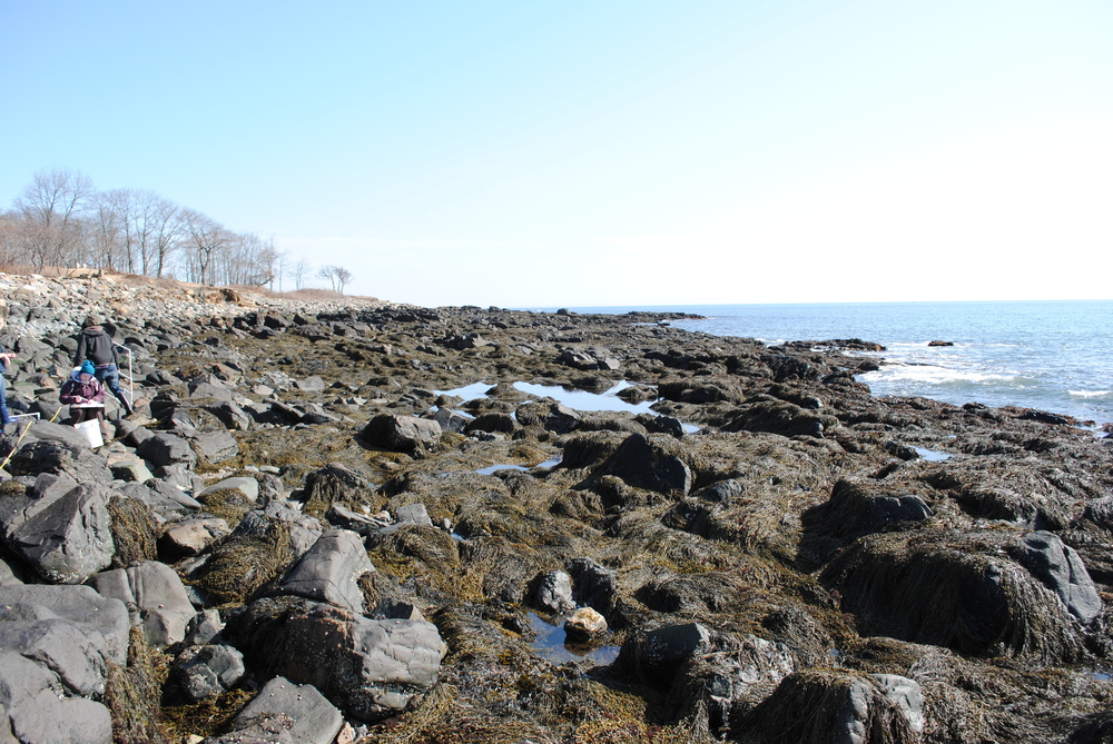 Rocky intertidal during low tide. Maine, USA.  Photo credit: Sara Edquist