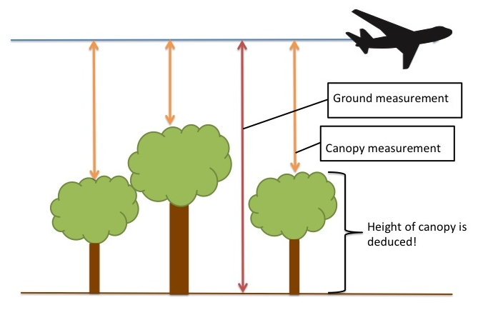 A depiction of how LIDAR can estimate the height of a forest canopy. Image credit: Alena Warren