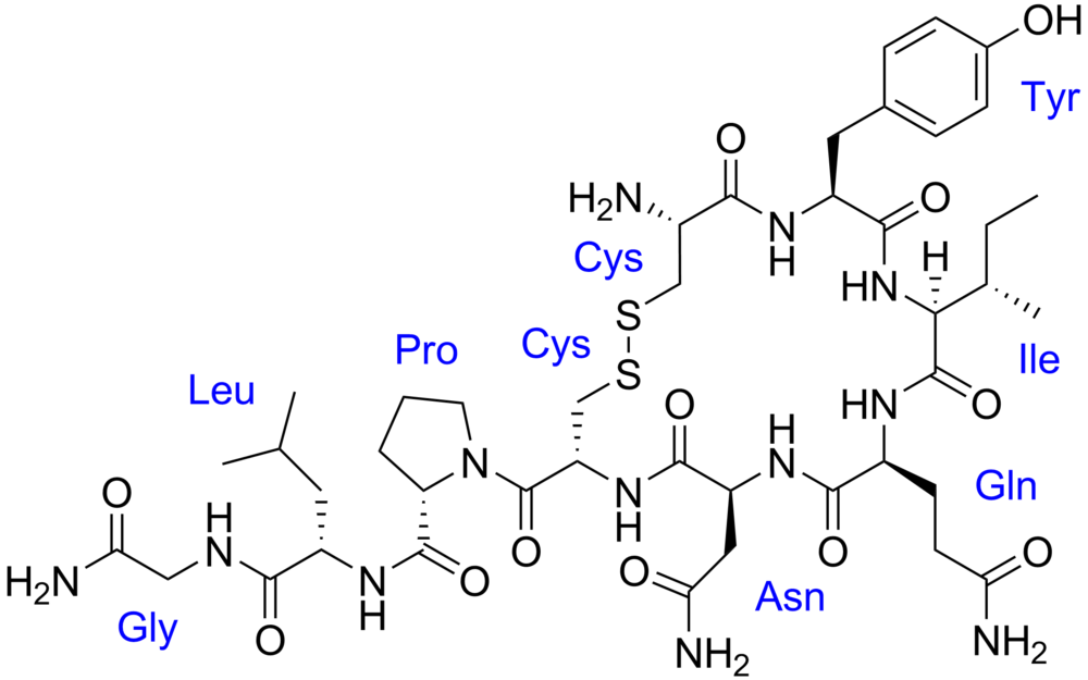 Oxytocin. Photo courtesy of wikimedia,org.