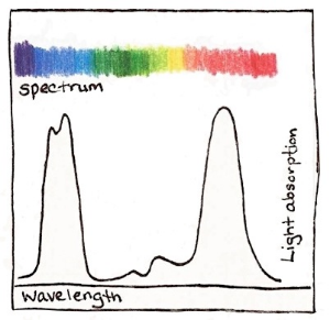 Plants absorb light in the blue and red parts of the visible light spectrum, between 400 - 450 nm and 600 - 700 nm.  Drawing by Claire Collie.