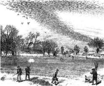 "Hunters and a flock of passenger pigeons from ""The Illustrated Shooting and Dramatic News,"" 1875."