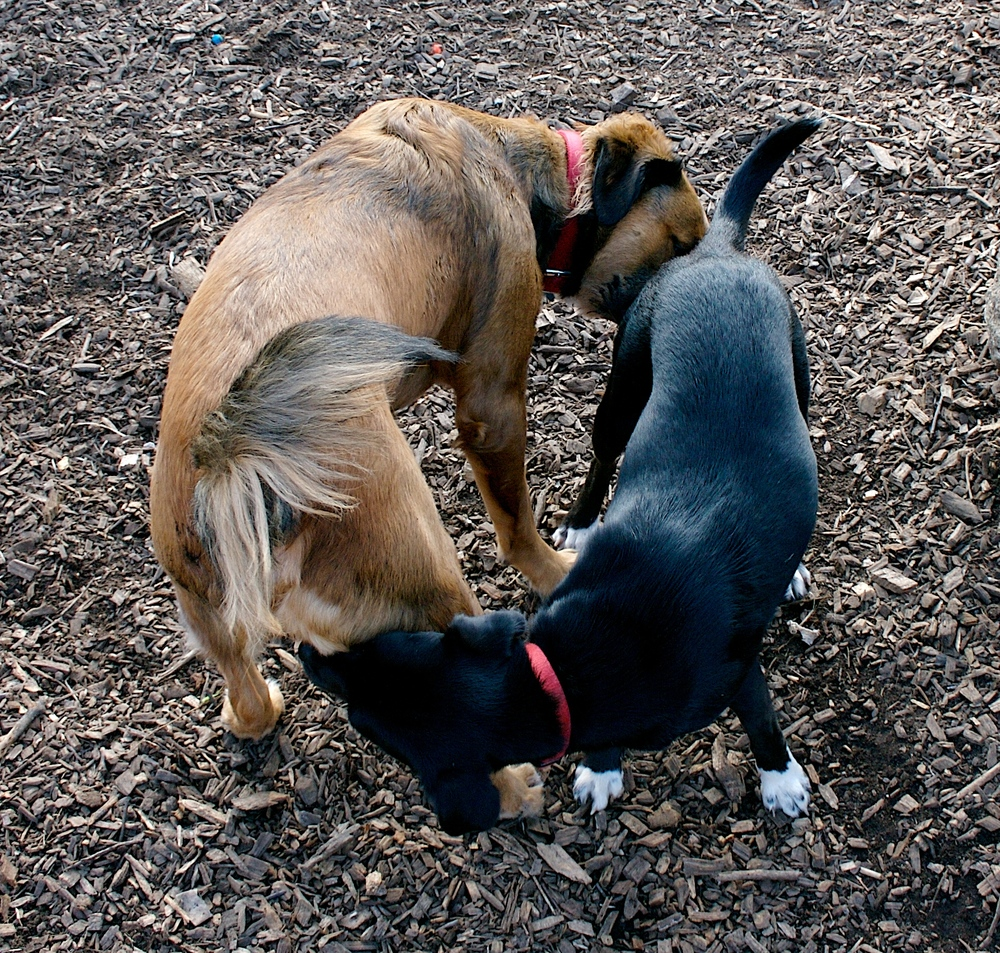 With such powerful sniffers, why do they have to be so close?! Regardless, would you want to exchange licks of an ice cream with these dogs after this scene? Sure, you will probably be fine but I still do not like it. Image credit: Tim Dorr with Butting Sniffing Ying Yang.