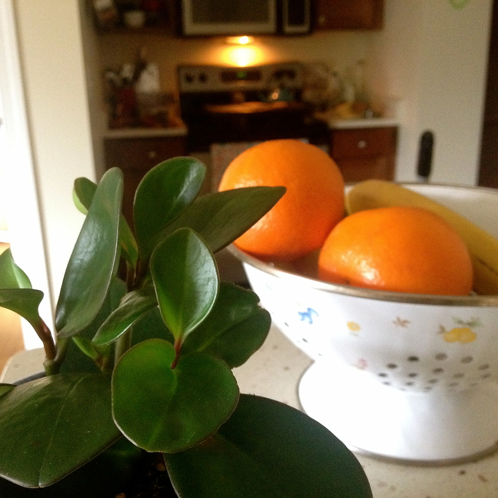 Mme Pepperomia in the kitchen with the fruit bowl.