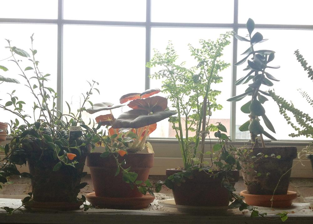 This is my windowsill.