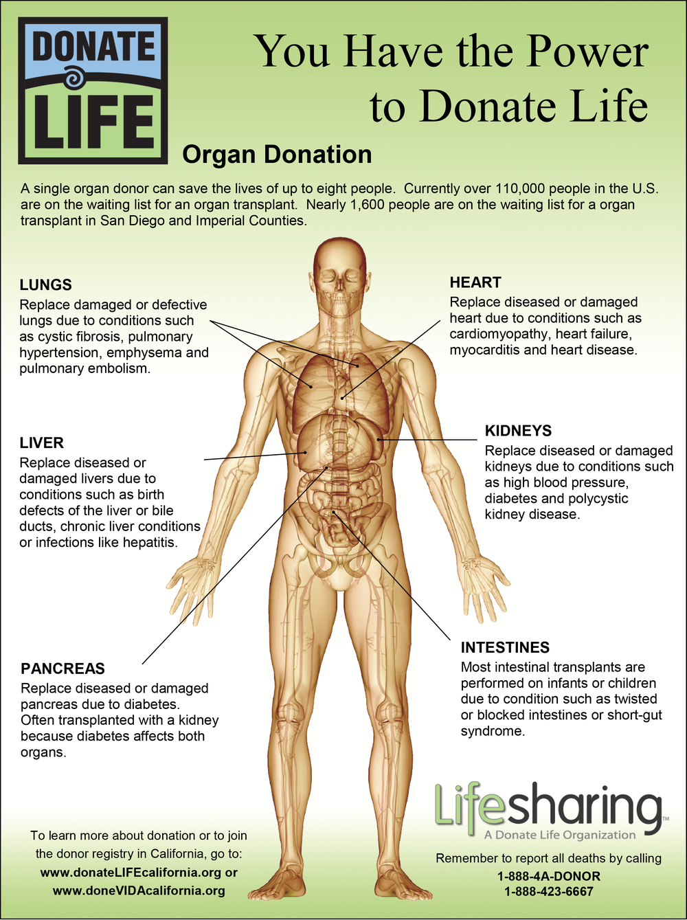 Here is an example of an organization supporting and explaining what your organs can do for someone else.