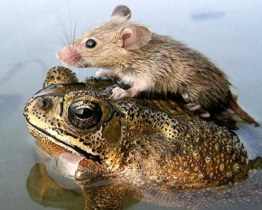 While interspecific relationships aren't true altruism you can read all about them in our reoccurring series: Mutualisms of the Month. Photo courtesy of sfgirl-thealiennextdoor.blogspot.com.