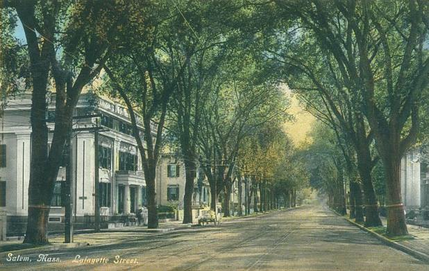 A postcard of an elm-lined street in Salem Massachusetts.