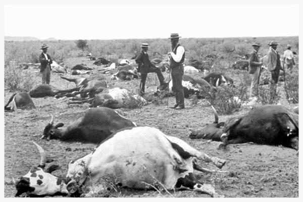 Example of the devastation of a cattle plague outbreak, this image from a 1986 occurrence. (Image from Wikipedia)