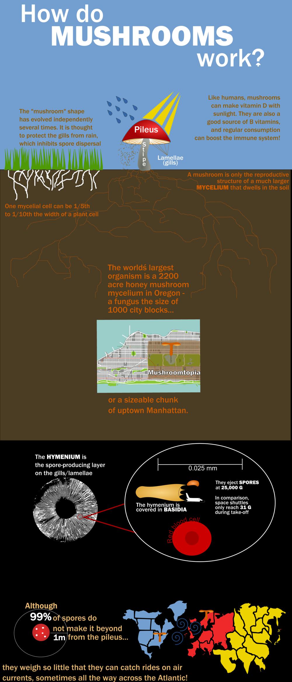 mushroom_infographic.png