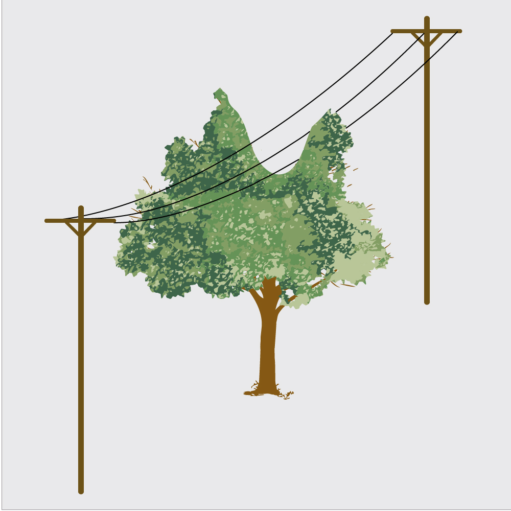If a growing tree gets in the way of power lines the middle section is often cut out.