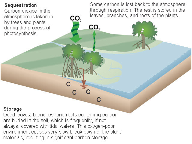 Going green how about going blue too feed the data for 0 4 soil carbon