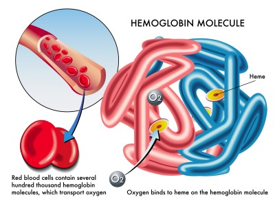Red Blood cells containing hemoglobin, an oxygen carrying molecule. (Image from TutorVista.com)