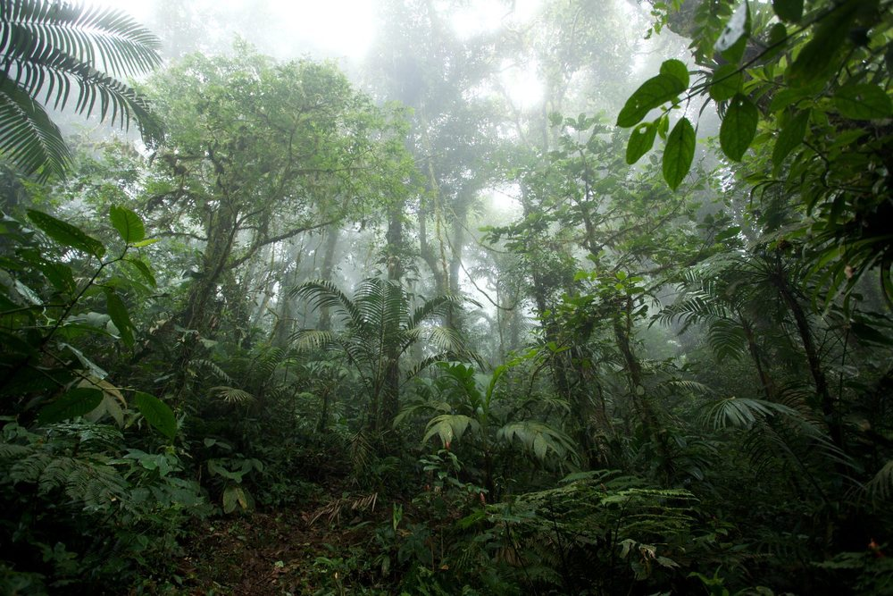 The cloud forests of western Panamá, the home of the Panamánian golden frog. Photo source.