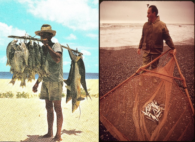 Fish catches on a good day (left) and a bad day (right).  Photo credit: Wikimedia Commons