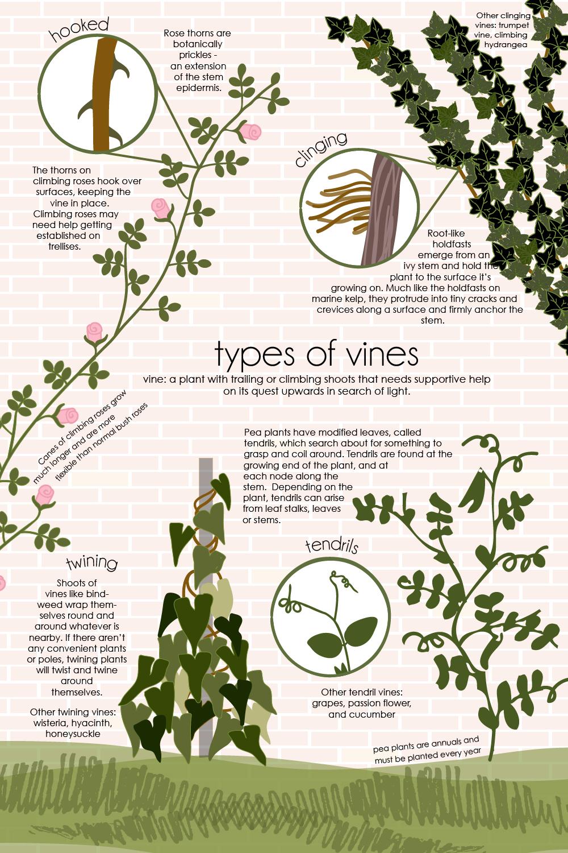 Vines-FTDM.jpg