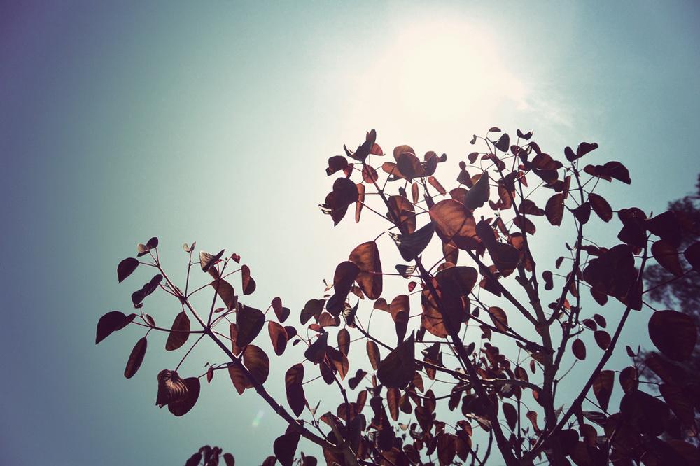 leafmealone.jpg