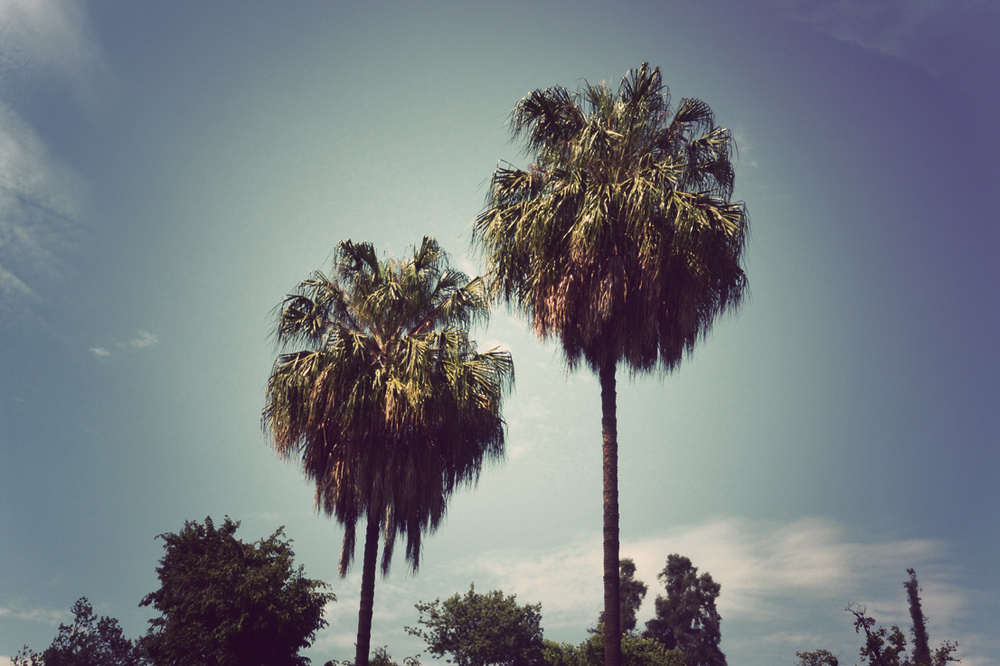 palms01.jpg