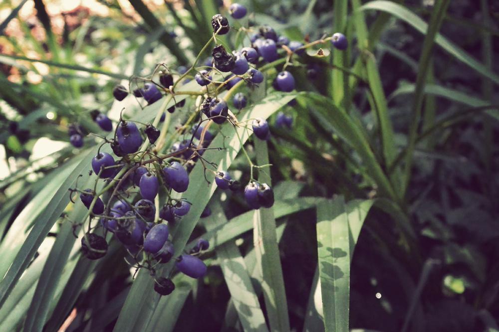 berryviolet.jpg