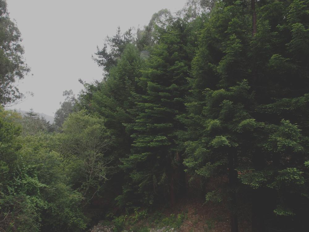 greengulch02.jpg