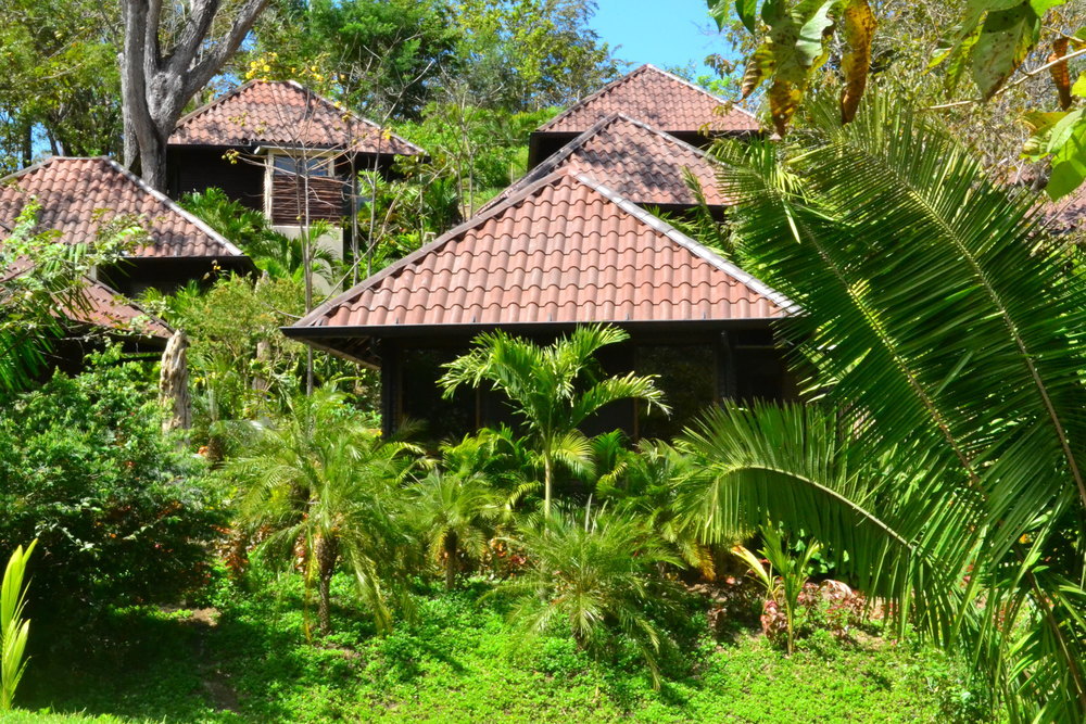 nature cottages on hill.jpg