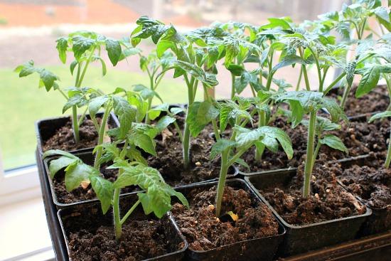 Plant Sale Whitelock Community Farm