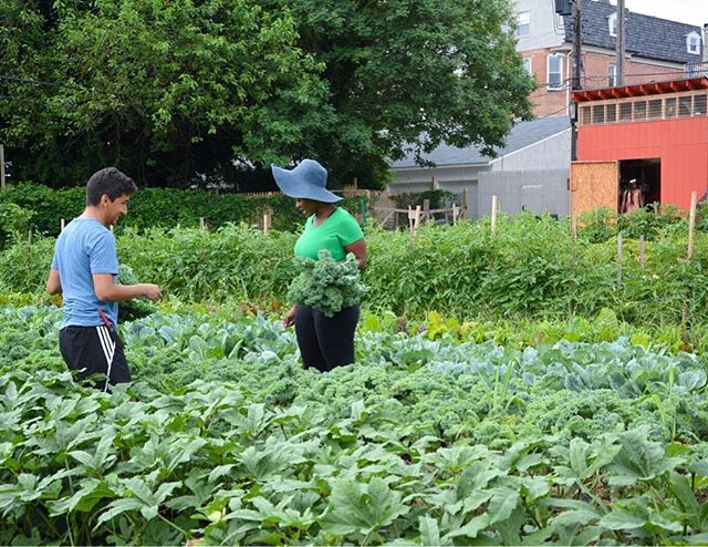 A little summer sunshine for your December Monday...💛🌞 Daniel and Nikki harvesting kale in a sea of green 🌱💚