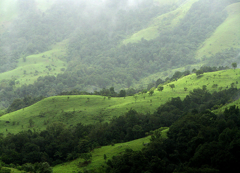 Shola highlands are found in Kudremukh National Park, Chikmagalur which is part of the Western Ghats. (Photo source:  Karunakar Rayker )