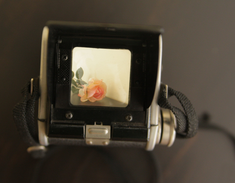 viewfinder flower.jpg