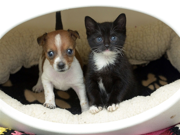 newsweek: This is a kitten and that is a puppy and these two think they are sisters. Cute photos of the day.