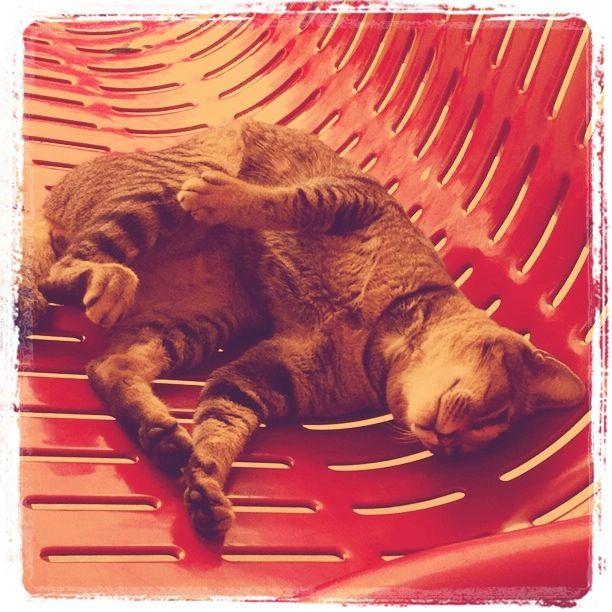 Cuddles please?!