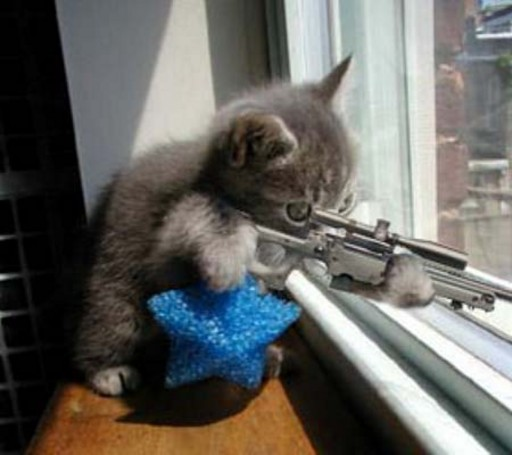 sniper kitty! (thanks Daniela for the picture)