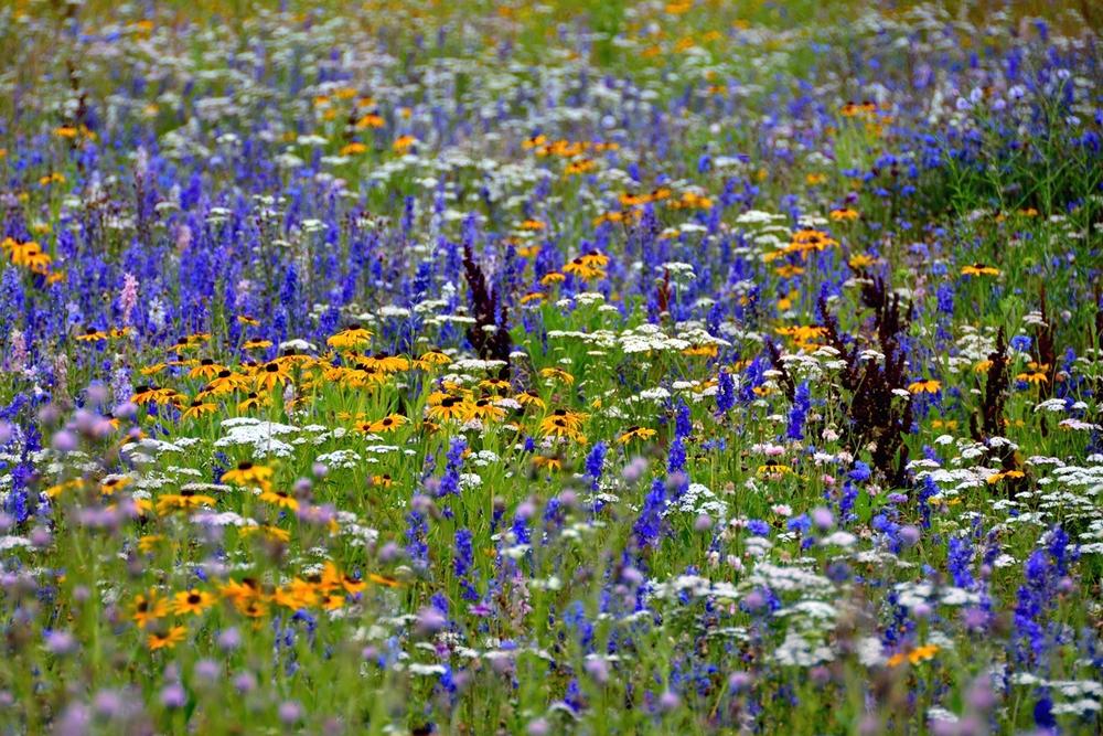 wildflowers2email.jpg