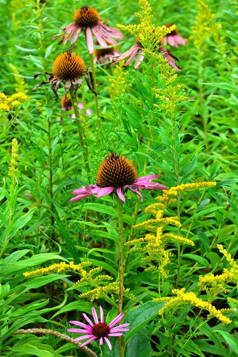 Accidental Floral Arrangement
