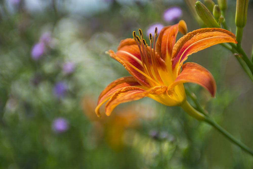 fencerowflowers3email.jpg