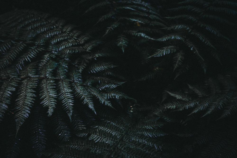 CForgePhoto-8 6.32.04 pm.jpg