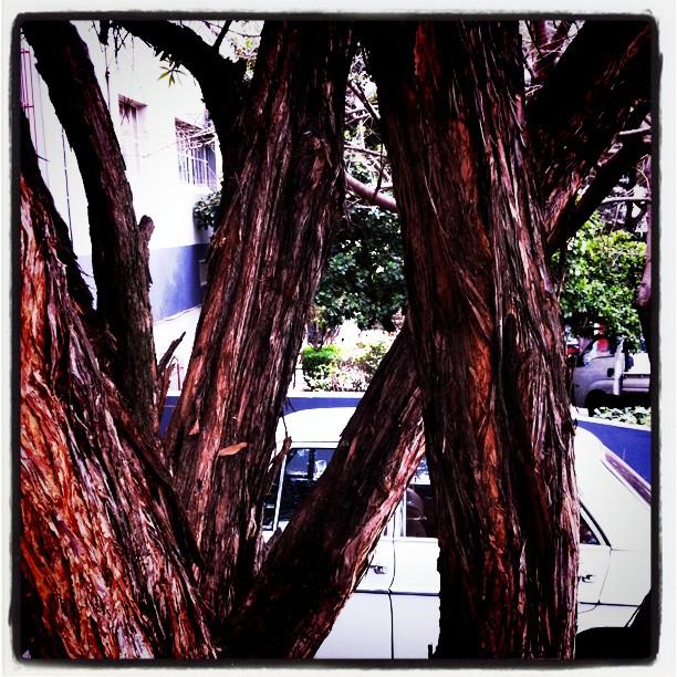 Spook (Taken with  instagram )
