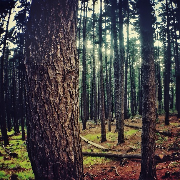 Rad trek through the forest today | #capetown  (Taken with  Instagram  at Newlands Forest)