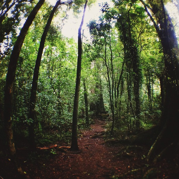 Otanewainuku Hike | #newzealand #nz (Taken with  Instagram  at Oropi)