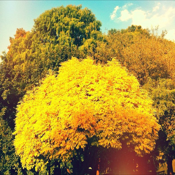 Autumn Harest (Taken with  Instagram  at Zoo Lake)