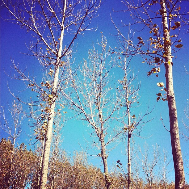 Hello #autumn #latergram #middleofnowhere (Taken with  instagram )