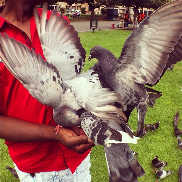 #skyrats - #instawalkpta (Taken with  instagram )