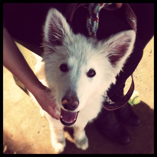 Eva (Taken with  Instagram  at Emmarentia Dam Dog Park)