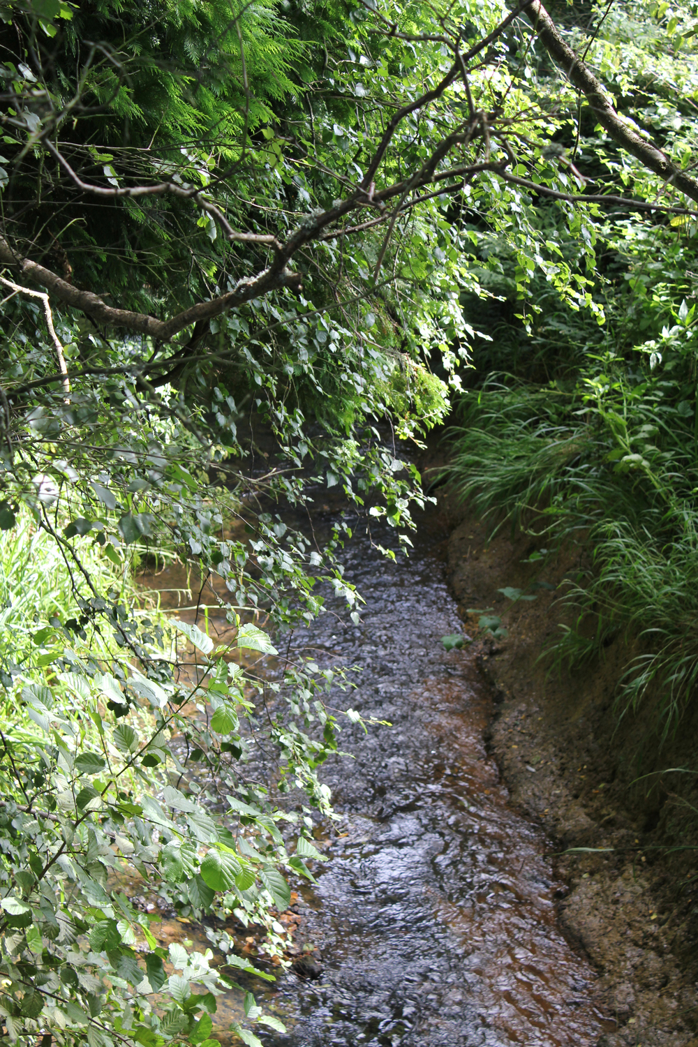 Sedlescombe Brook.jpg