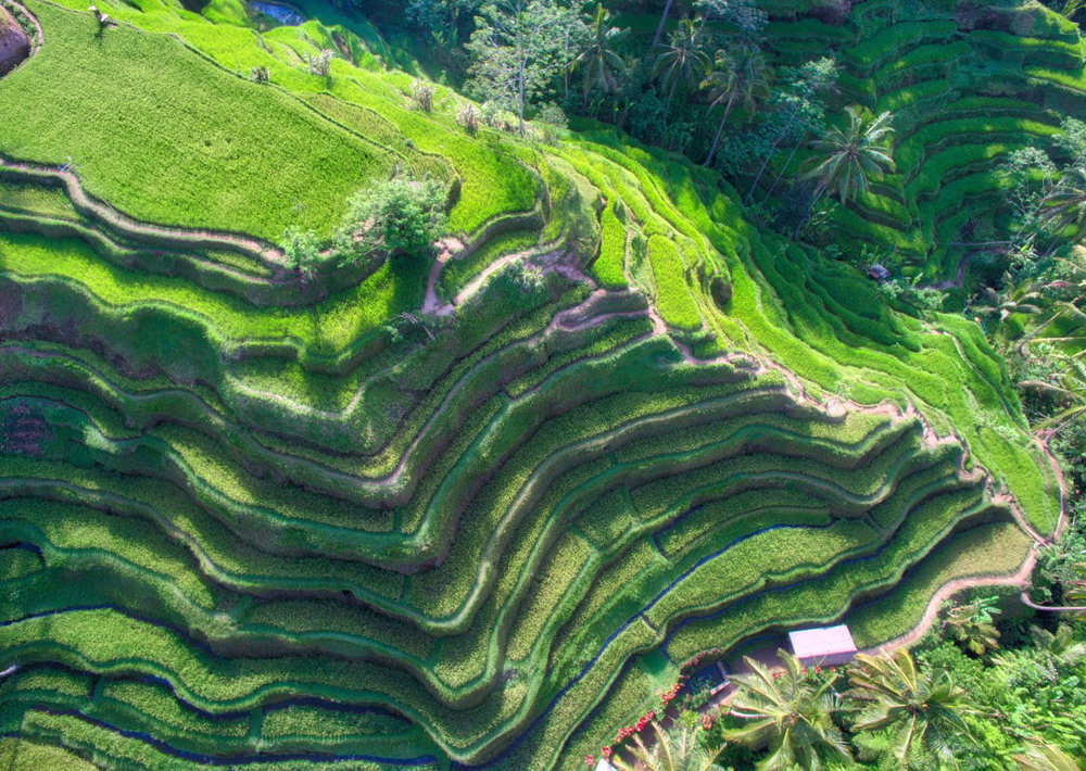 bali-rice-fields-from-above-trey-ratcliff.jpg
